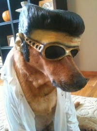 Hallowen Elvis Dog