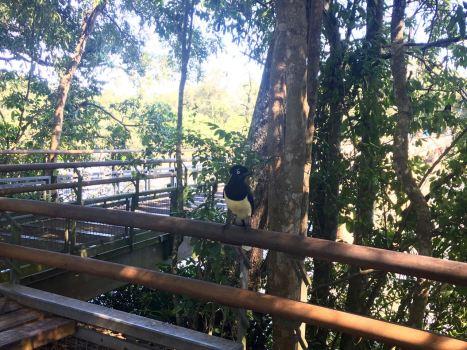 Iguazu (1) - 41 of 86