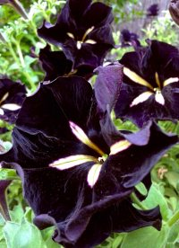 Notes on the Gothic Garden & its Flowers | The Year of the ...