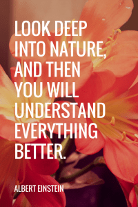 Albert Einstein Quotes - Look deep into nature, and then you will understand everything better