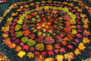 vinyasa fall
