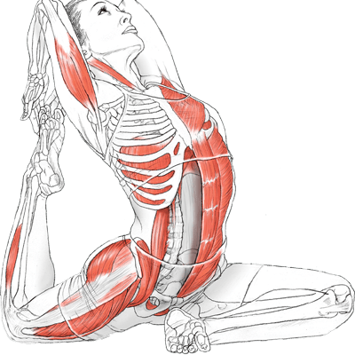 yoga anatomy Archives - The Yoga House
