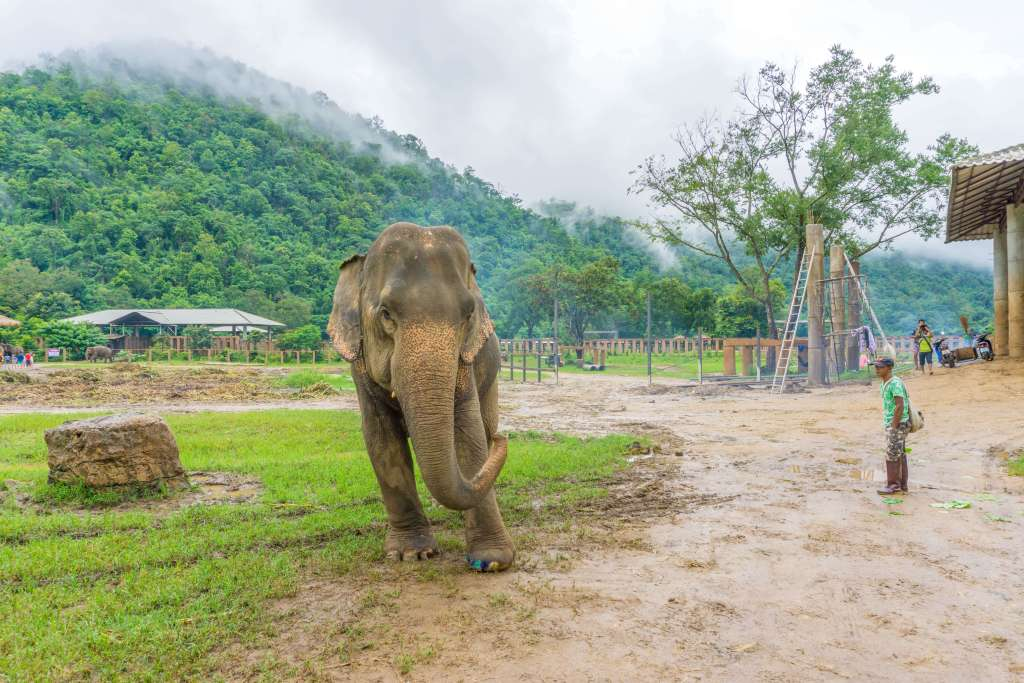 Elephant Nature Park - what to do in Chiang Mai in 4 days