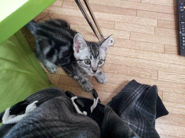 Earn Extra Money in Japan - Pet Sitting