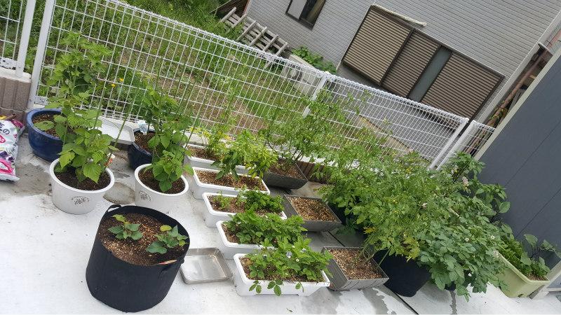 Beginner S Guide To Home Gardening In Japan The Yokohama Life