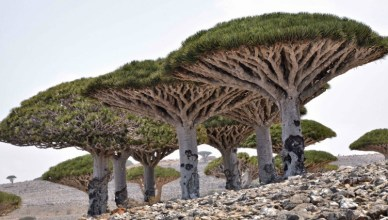 10 Interesting Socotra Island Facts You Need To Know