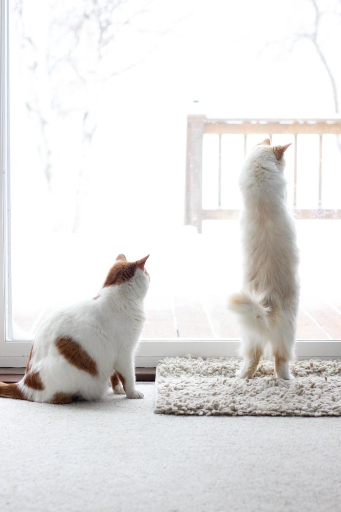 kitty meow meow-3