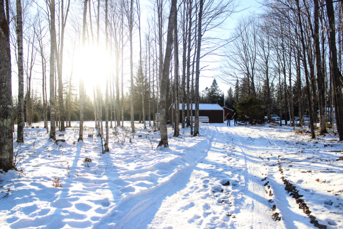 pretty sun woods
