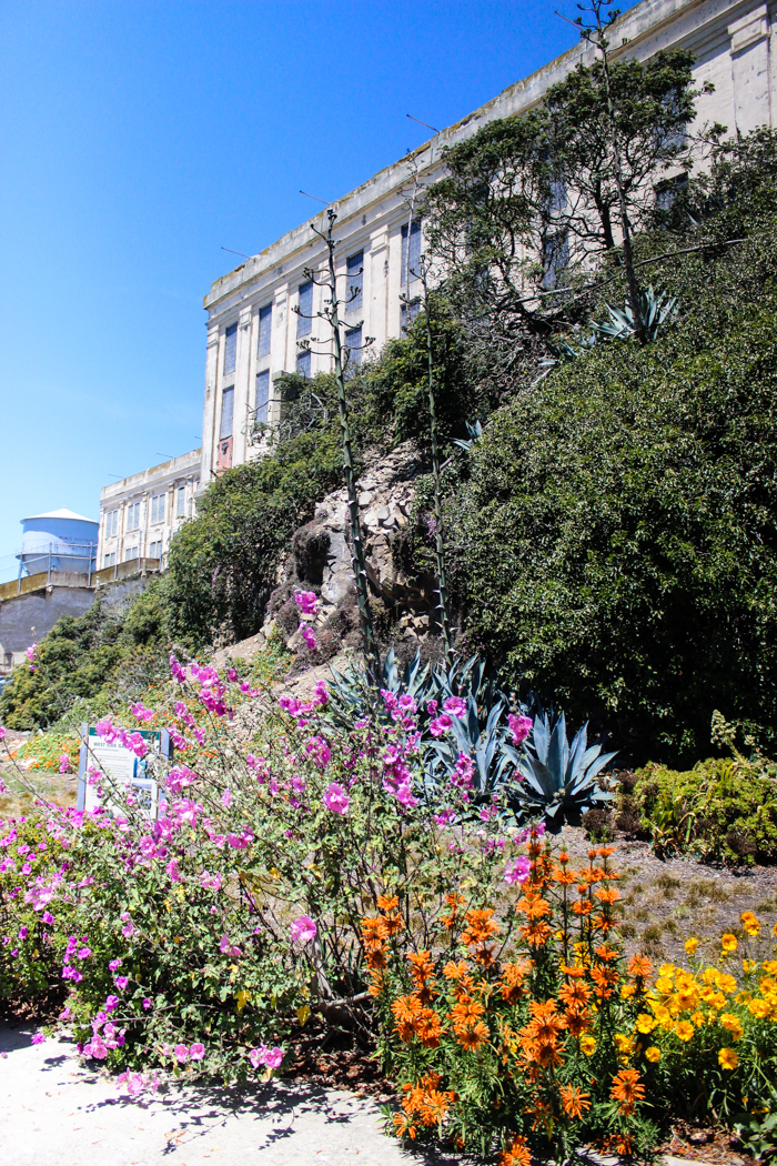beautiful flowers at alcatraz