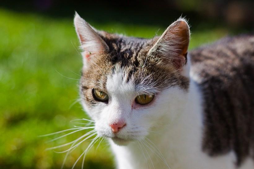 Eddie cat