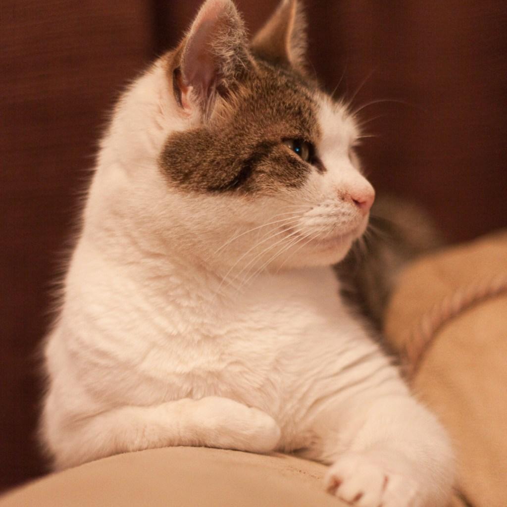 Eddie cat International Cat Day
