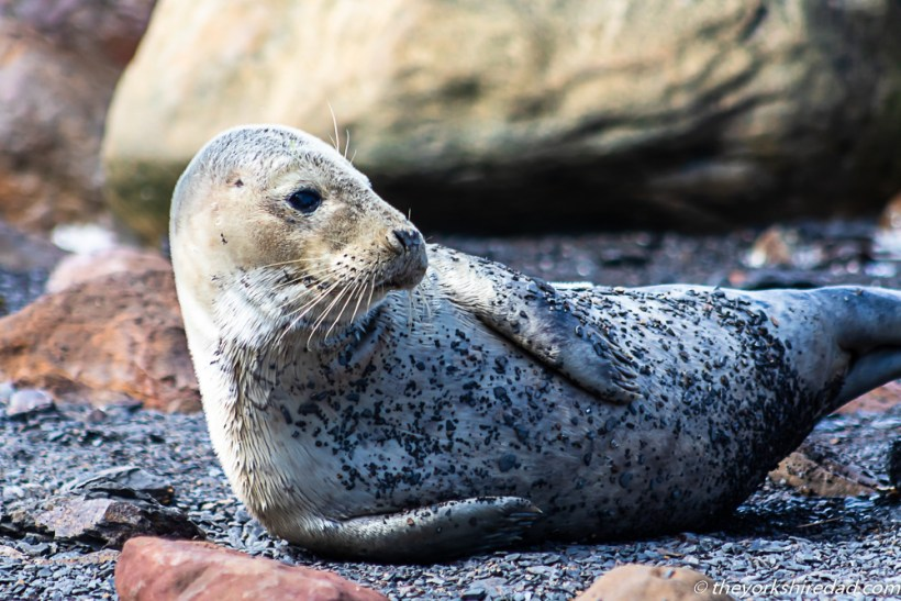 Seal Watching at Ravenscar The Yorkshire Dad of 4
