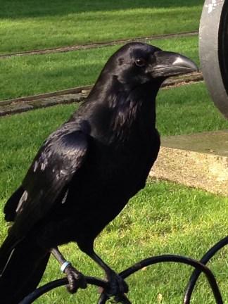 The Ravens...