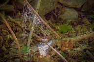 _MGL6464_Spiderweb