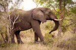IMG_0672_Elephant_web