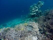 Fond marin et récifs coralliens à 3-4 mètres de profondeur seulement.