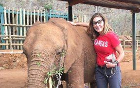Debra Navarro elephant