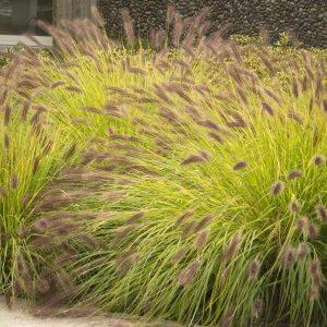 Grass Black Fountain