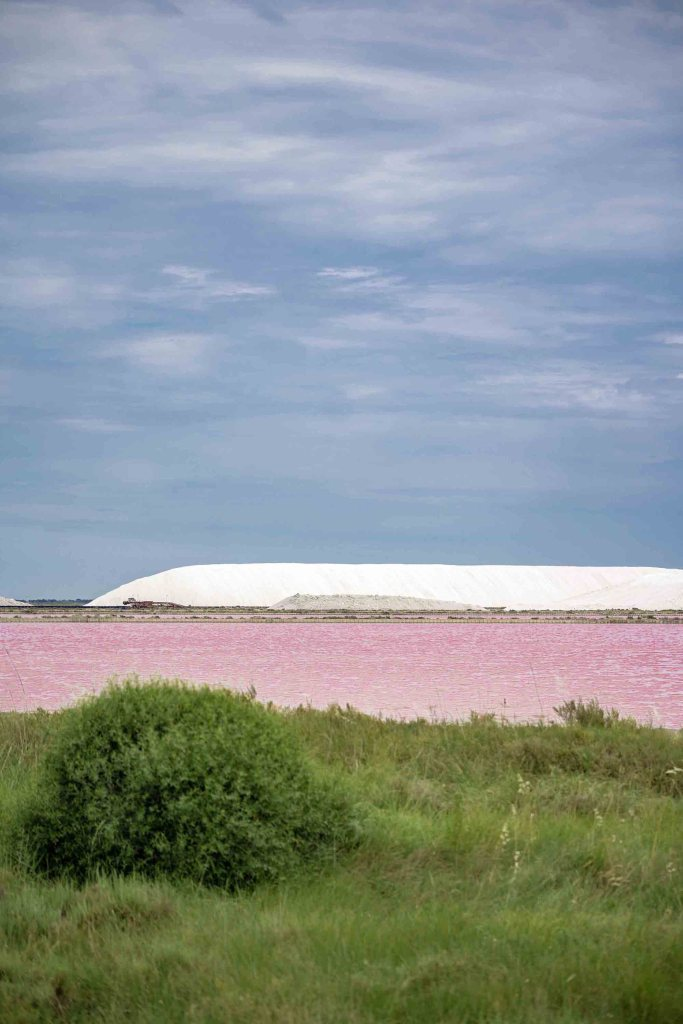 Salins Rose d'Aigues-Mortes