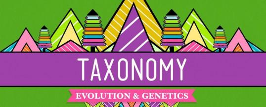 Cara Menerapkan Taxonomi Kategori, Tag dan Atribut Pada Website