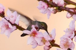 Slider_Wildlife-BackYard-HummingBird14