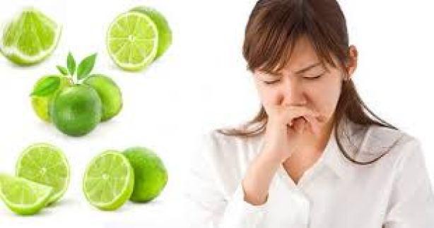 Đặc biệt, lá chanh tươi có nhiều tinh dầu với mùi thơm dễ chịu nên thường được sử dụng làm nguyên liệu cho nồi xông giải cảm rất hiệu quả.
