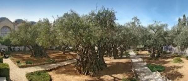 Để biết được giá dầu oliu tinh khiết ở đâu tốt nhất..? Thì không nơi nào khác ngoài thánh địa của cây oliu
