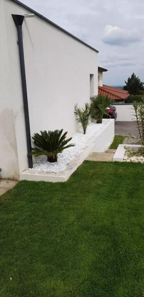Gazon en rouleau et palmiers