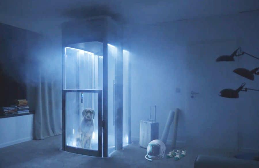 Stiltz lifts space dog
