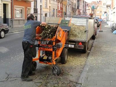 Snoeiwerken van bomen