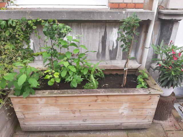 Fruitboompjes in bak voor gevel