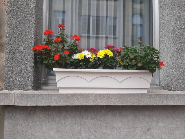 Plantenbak op vensterbank