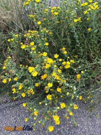 Alpine loop flowers
