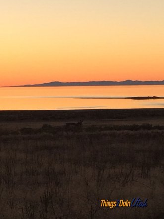 antelope-at-sunset-at-great-salt-lake