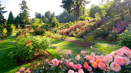 Rose Garden Portland Travel