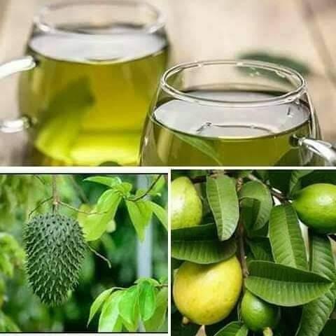 HEALTH BENEFITS OF GUAVA AND SOURSOP LEAF TEA COMBINATION. Thingscouplesdo.com