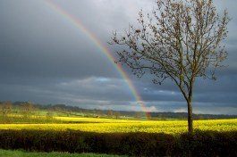 Now we may know where the legend of the pot of gold at the end of the rainbow originated...sun illuminates a field of rape seed flowers.