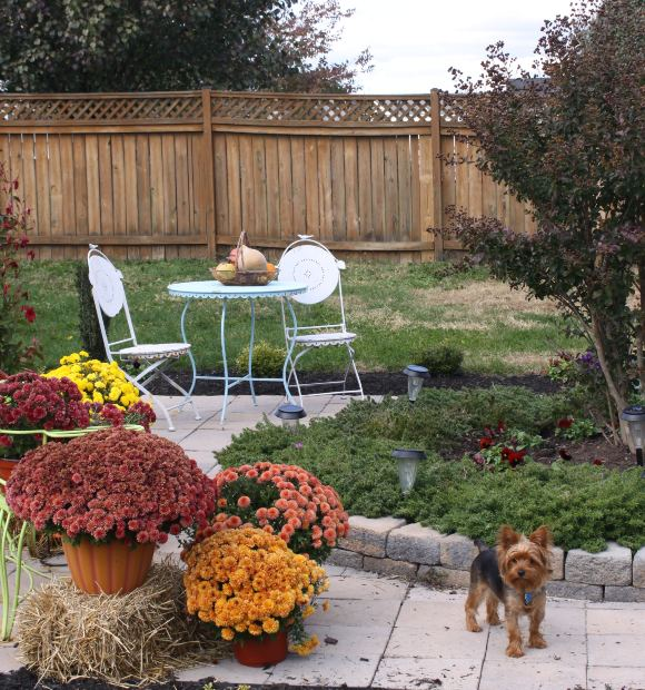 Want to redesign your garden consider these essentials for Redesign your garden