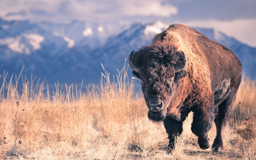 Top US Destinations for Wildlife Photography