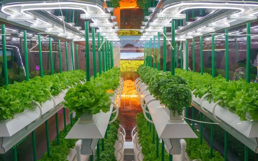 Hydroponic Gardening: Everything To Know