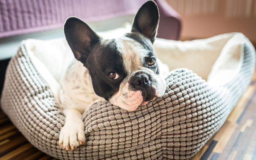 Ways of Making Your Aging Dog Comfortable