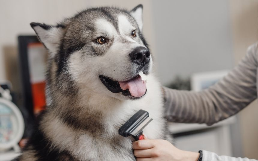 5 Essential Accessories for Grooming Your Dog at Home