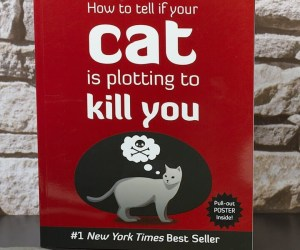 How To Tell If Your Cat Is Plotting To- Kill-You
