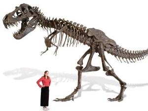Full-size T-Rex skeleton replica
