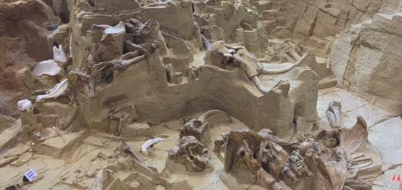South Dakota Mammoth Site