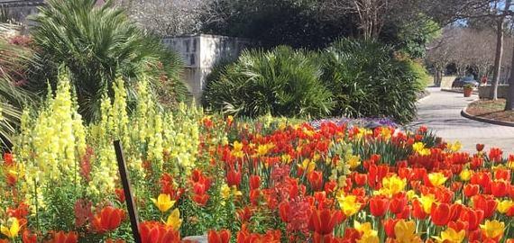 Texas Arboretum Botanical Garden
