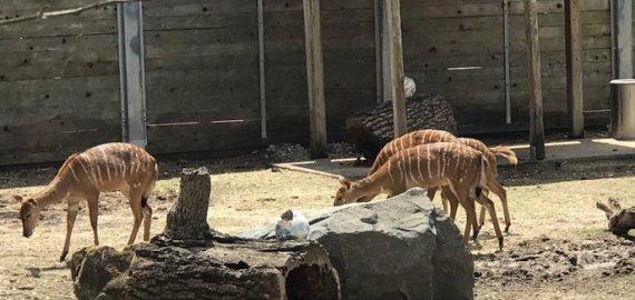 Texas Houston Zoo