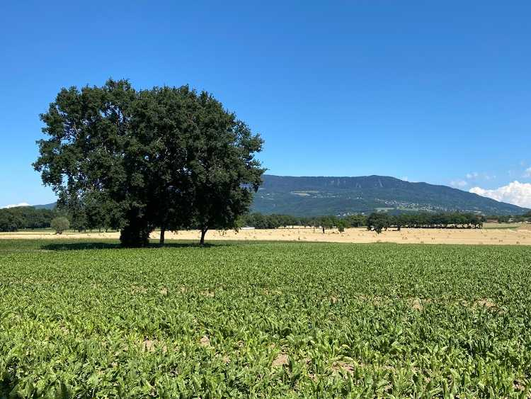 bike route through Geneva's Farmland