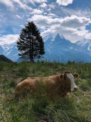 SWISS STAYCATION: MÜRREN AND THE LAUTERBRUNNE VALLEY