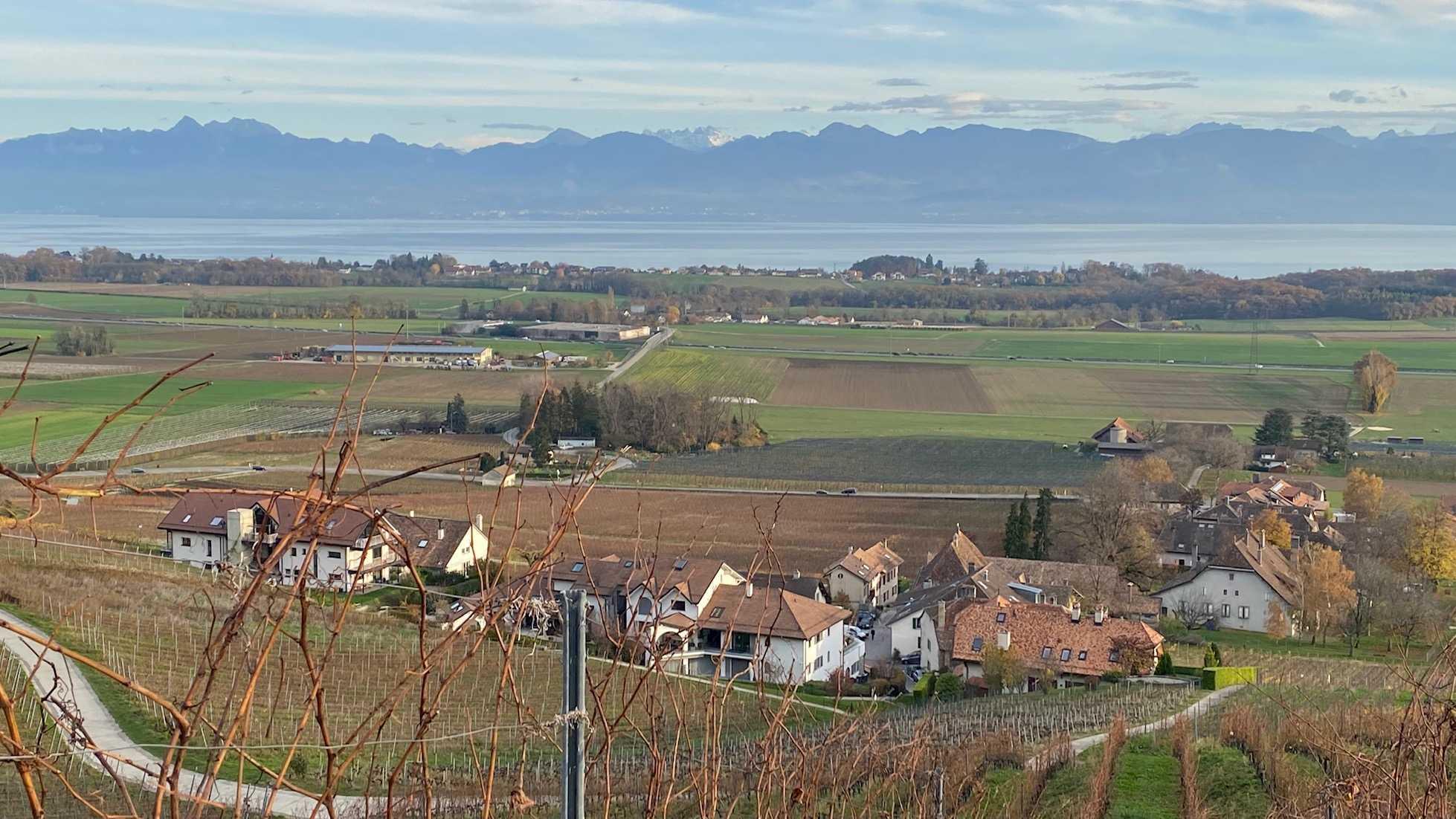 Panoramic view of the vineyards, Vaud